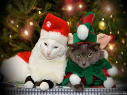 cats-front-christmas-treet