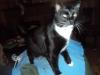 Vena Cat Black & white