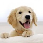 Happy Dog- Pet Resource Links