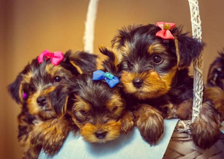 Cute dogs-trendy names.jpgresized
