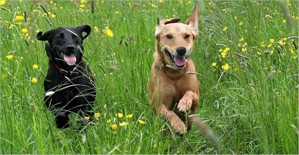 Dogs running through grass flowers