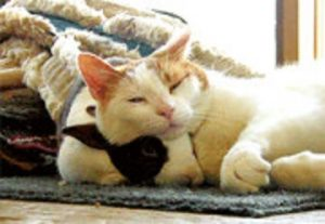 Cats snuggle- Why Cats purr?