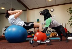 Lady dog gym exercise