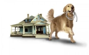 Finding Home You & Your Petss