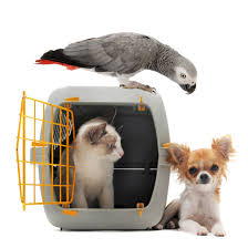 New Home Pets Cat Grey Bird Small Dog near kennel