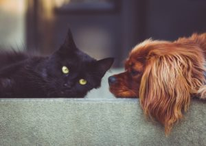 Rust tDog Black Cat choose right pet