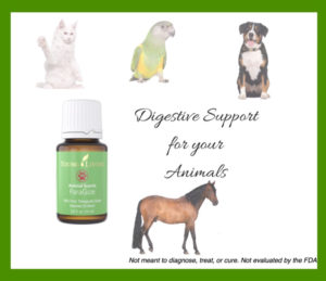 White Cat Yellow Green Bird Brown White Dog Tan Horse Essential Oil Bottle Green Label Digestive Support