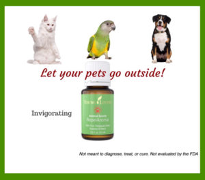 Cat Bird Dog Essential Oil Bottle Green Label
