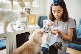 Pet Sitter feeding cats in Lamonte-Sedalia area