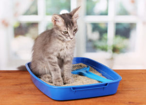 Cat Litter Box small blue