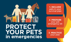 Pet Emergency Banner