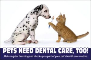 Pet Dental Health Orange Tabby cat holding tooth brush with Dog
