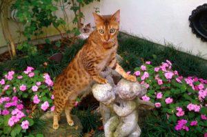 Pet Sitters Orange Tabby Cat