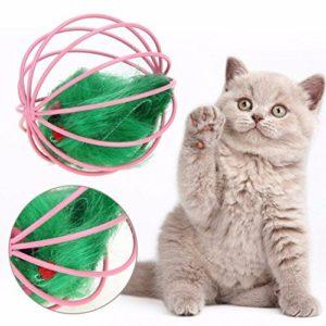 Knob Noster Sedalia pet Sitter cat playing