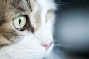 Cat Care Covid-19
