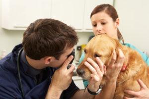 Dog Exam Vet Clinic