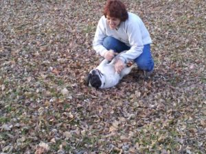 Pet Sitter playing with Frenchie dog