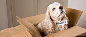 Moving with pets. Dog in box.